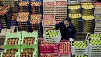 A buyer inspects a green apple as he stands beside crates of fresh produce in the fruit and vegetable section of Rungis wholesale food market in Rungis, France, on Jan. 15, 2015. MUST CREDIT: Bloomberg photo by Marlene Awaad.