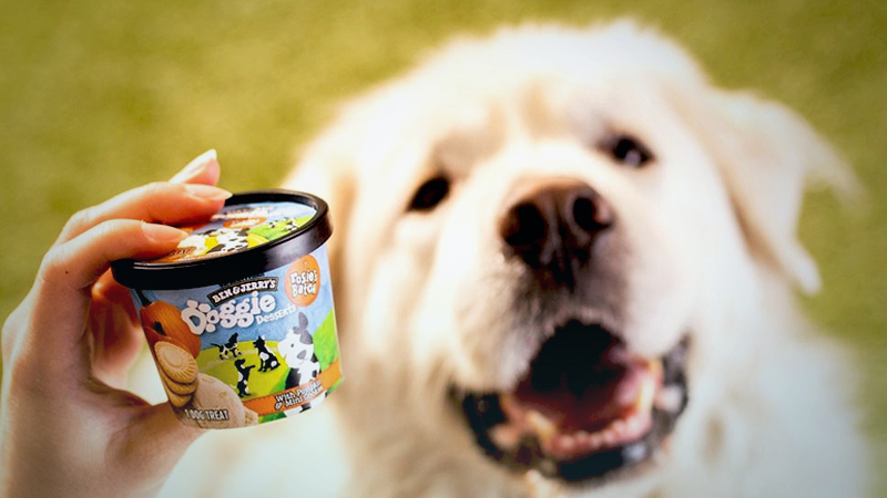 Ben & Jerry's this week announced the debut of Doggie Desserts: four-ounce cups of mostly nondairy frozen treats, one featuring pumpkin with cookies and another with peanut butter and pretzels.MUST CREDIT: Ben & Jerry's handout photo