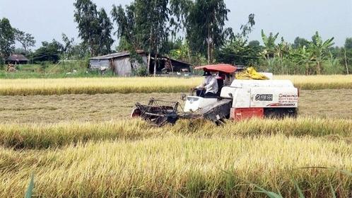 Farmers harvest the winter-spring rice in Tiền Giang Province's Gò Công Tây District. — VNA/VNS Photo Minh Trí