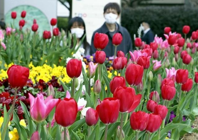 Ice tulips are in full bloom at Roppongi Hills in Minato Ward, Tokyo, on Friday. (The Yomiuri Shimbun)