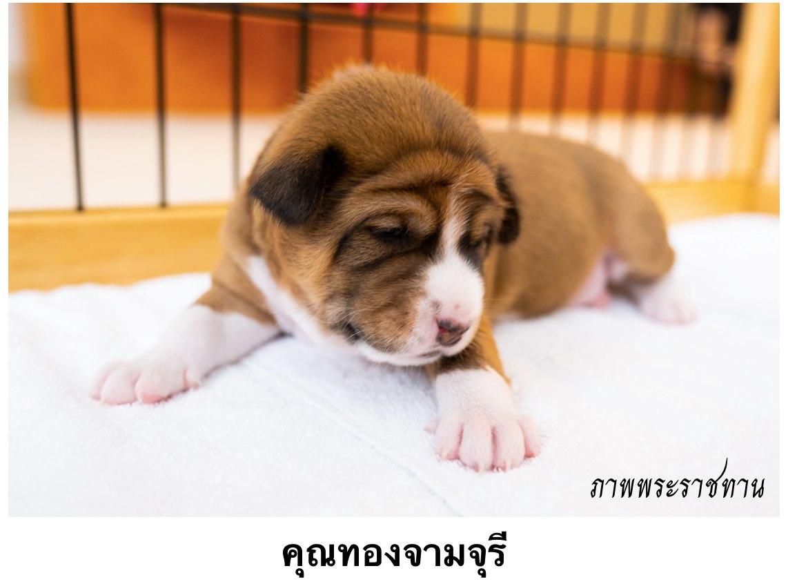 Thong Chamchuri