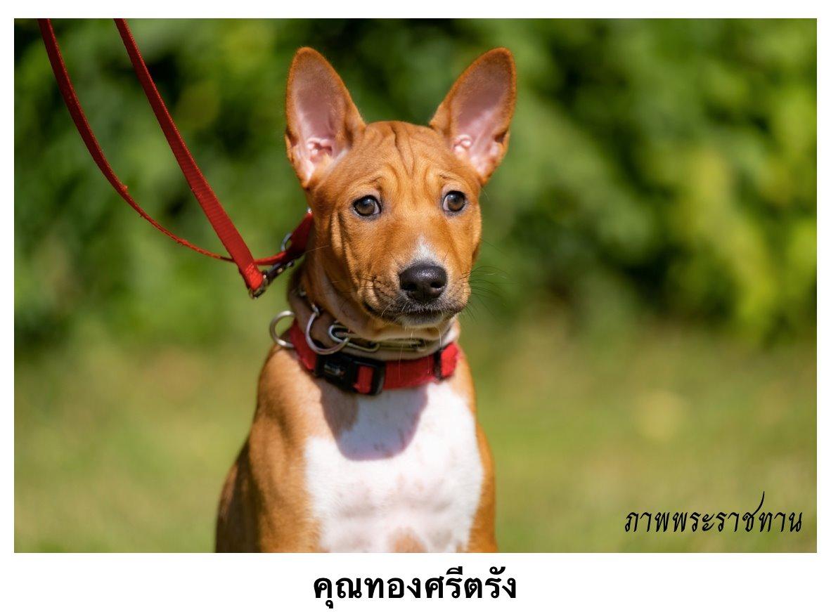 Thong Sri Trang