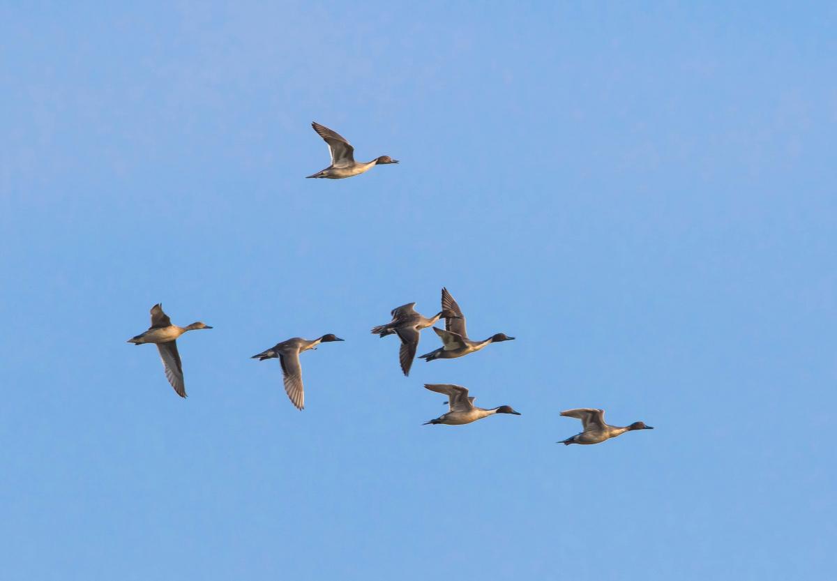 泰国那空沙旺府冬季可以看到候鸟