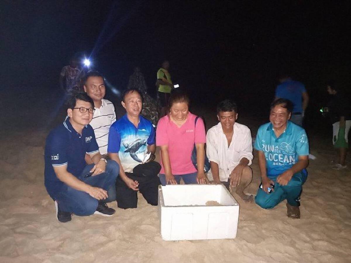 Joy as leatherback turtle lays eggs on Phang-nga beach
