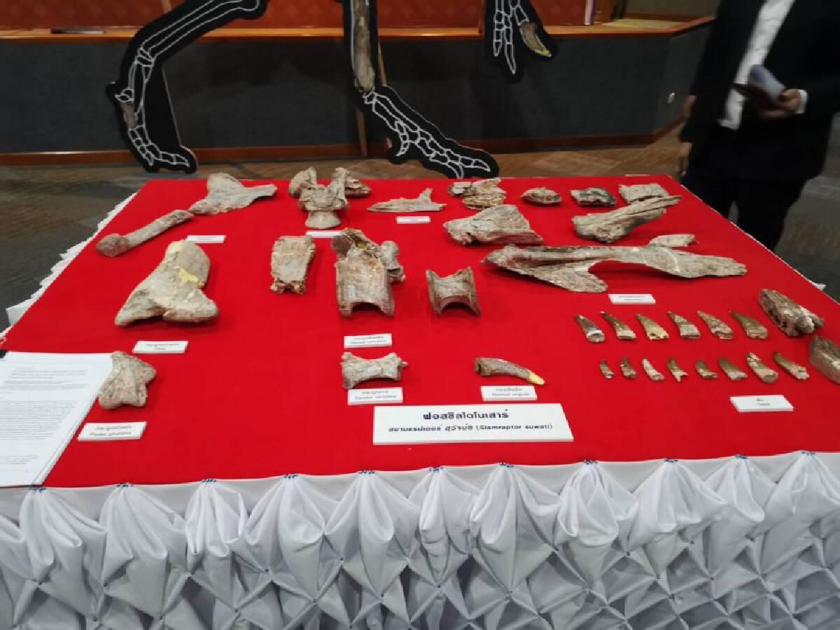 Fossils of 12th dinosaur species found in Nakhon Ratchasima