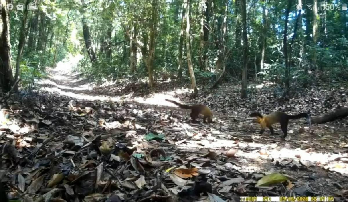 Wildlife flourishes as humans kept away due to lockdown