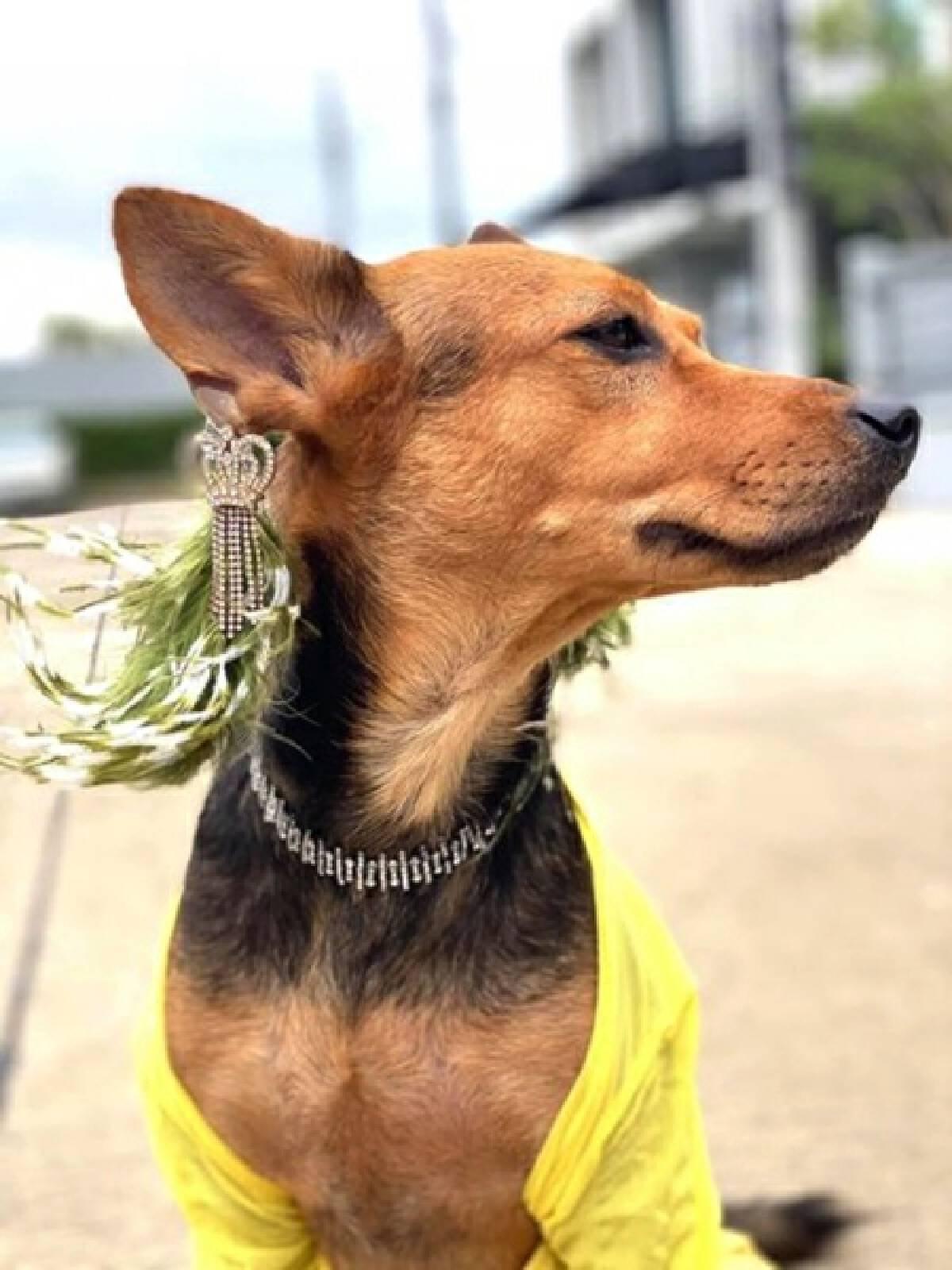 Diamonds are a dog's best friend