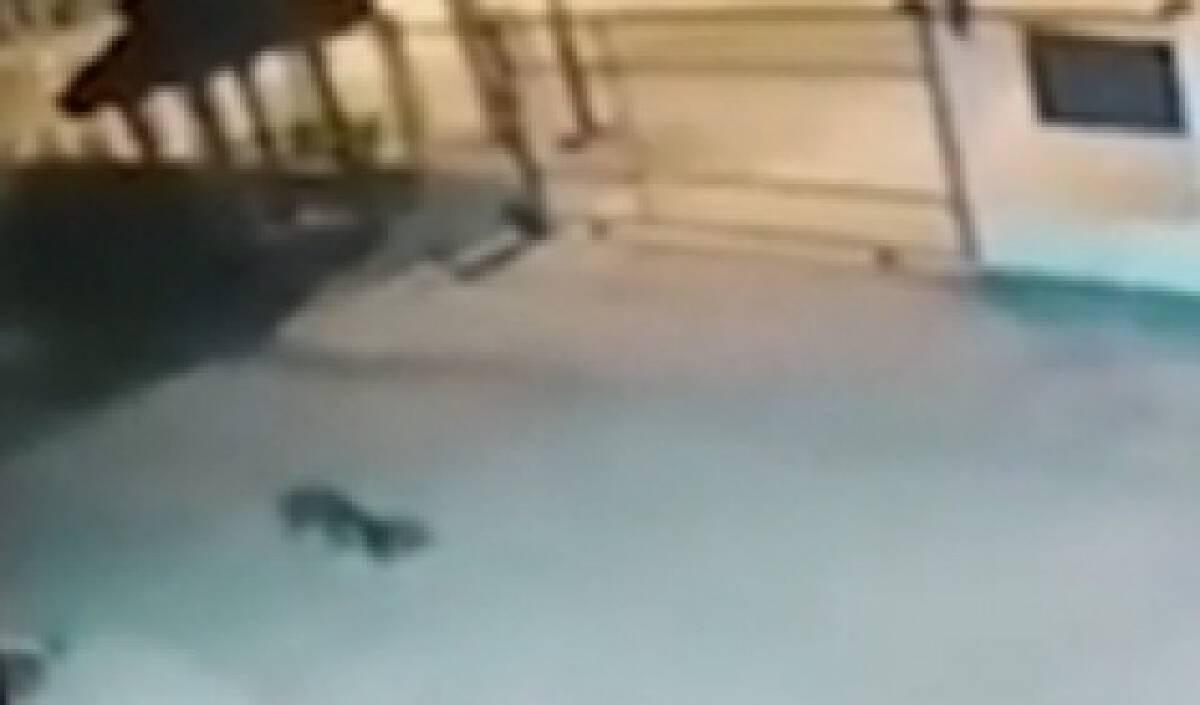Smart dog facilitates arrest of two alleged drug dealers in Phrae