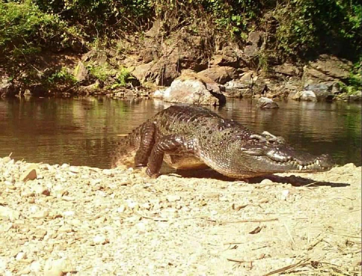 Photo Credit: Kaeng Krachan National Park