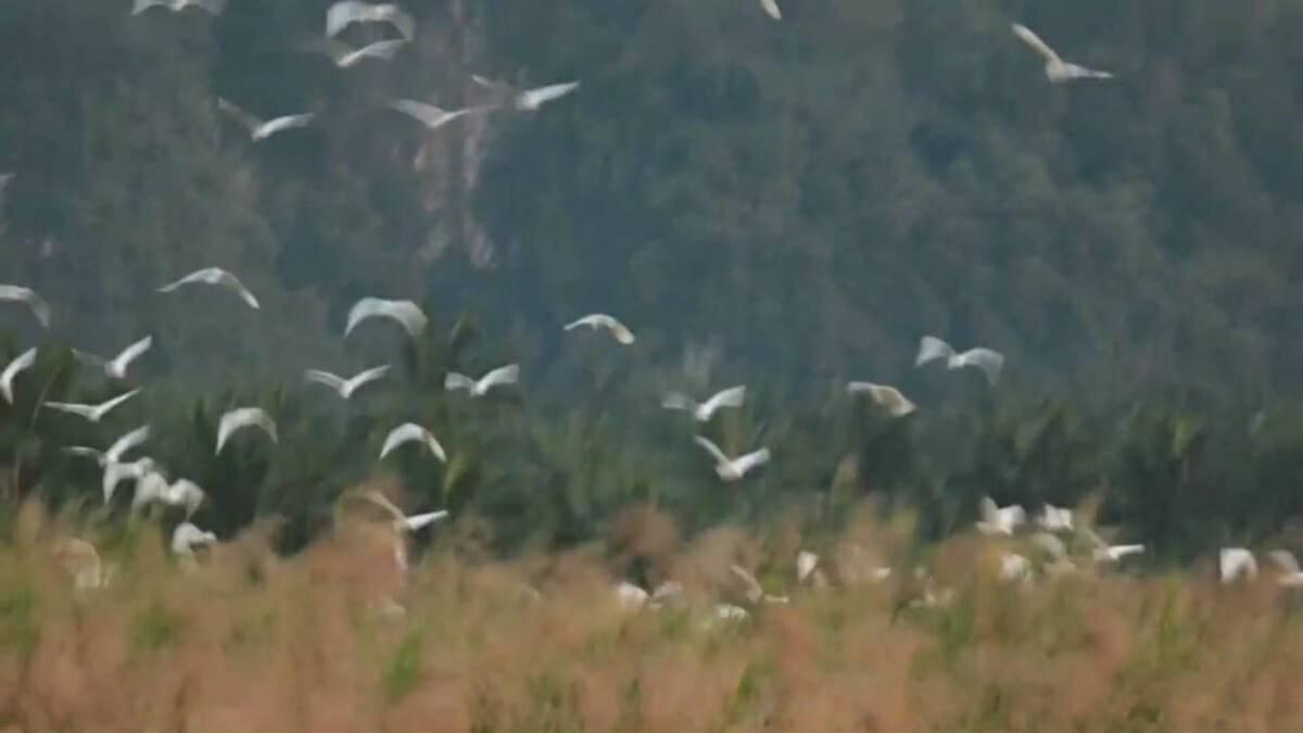 Wild birds draw crowds to Krabi