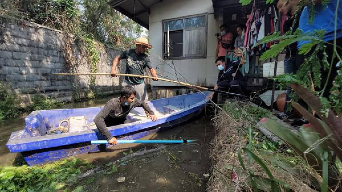 Crocodile three metres long caught in Samut Prakan