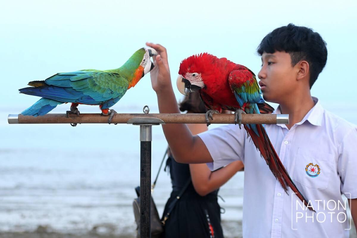 Birds splash Phuket beach with vivid hues
