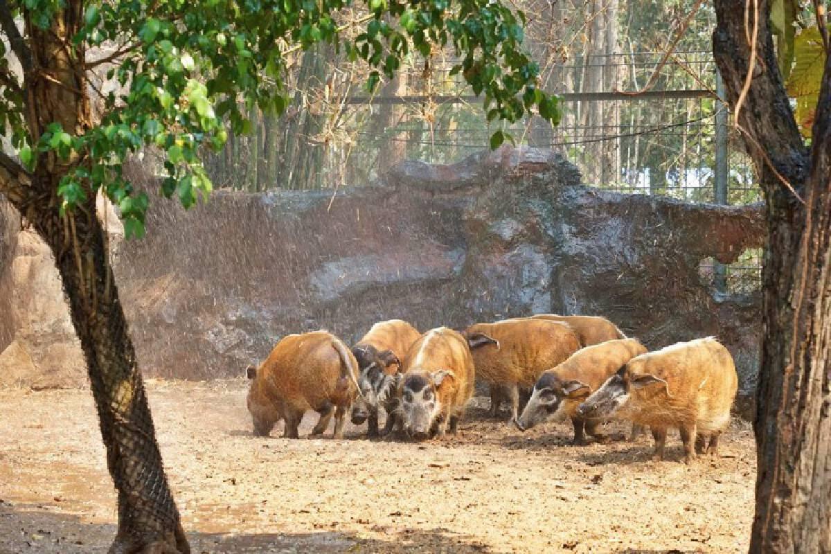 Chiang Mai Night Safari deploys 'DIY aircon' for animals hit by heat, smog