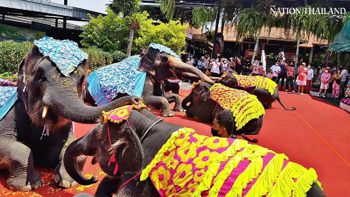 Elephants join Songkran spectacular at Nong Nooch Tropical Garden