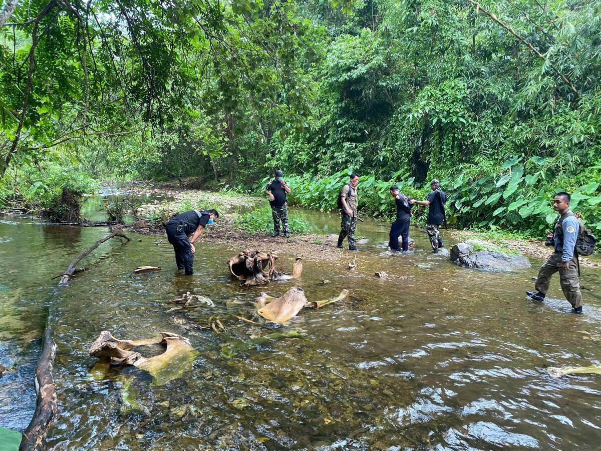 Karen national arrested over elephant carcass in Phetchaburi