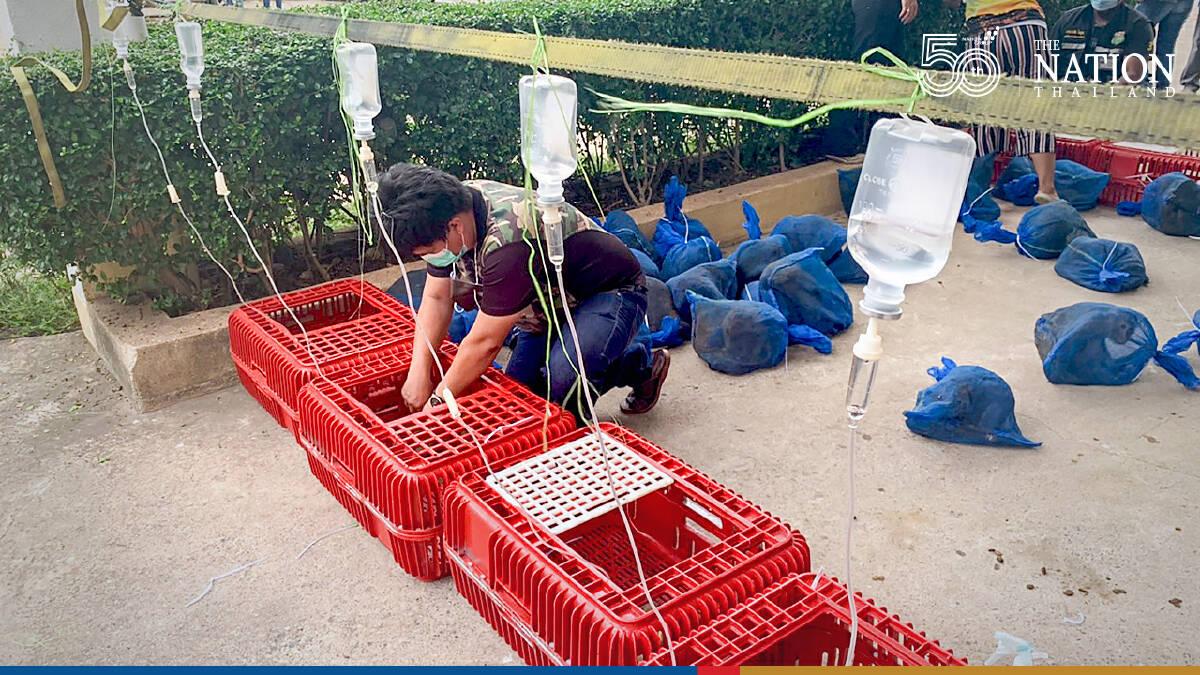 Man arrested for allegedly smuggling over 100 wild monkeys