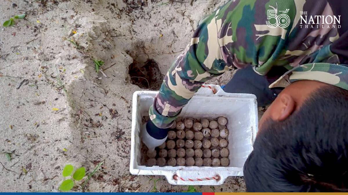 Rare hawksbill sea turtle eggs found on island off Prachuap Khiri Khan