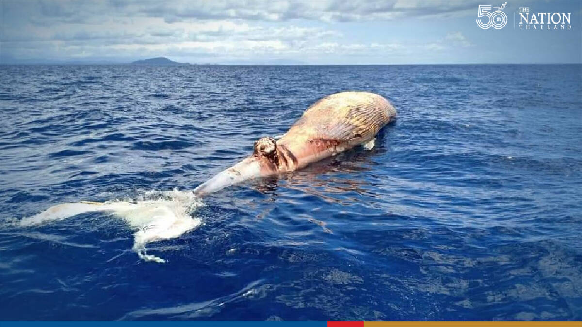 Scientists probe carcass of giant white whale found floating in Gulf of Thailand
