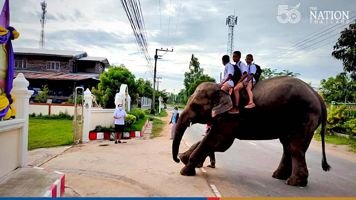 Special ride to school in Surin
