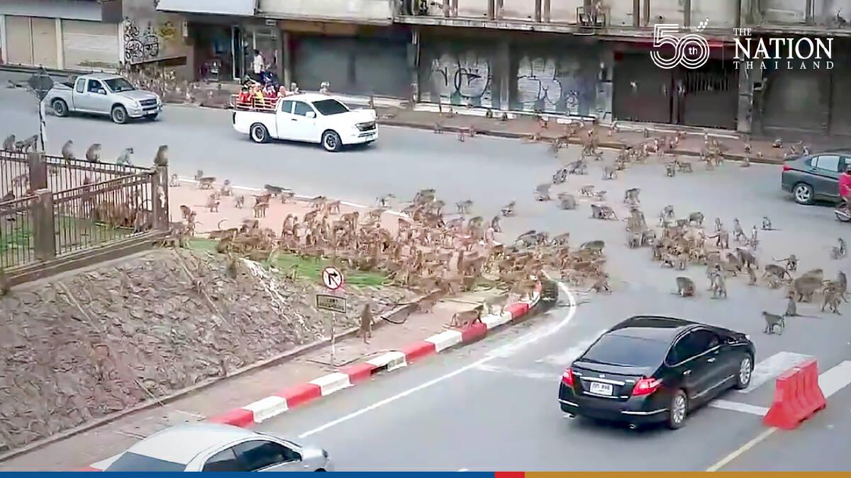 Warring monkeys bring Lopburi traffic to a standstill