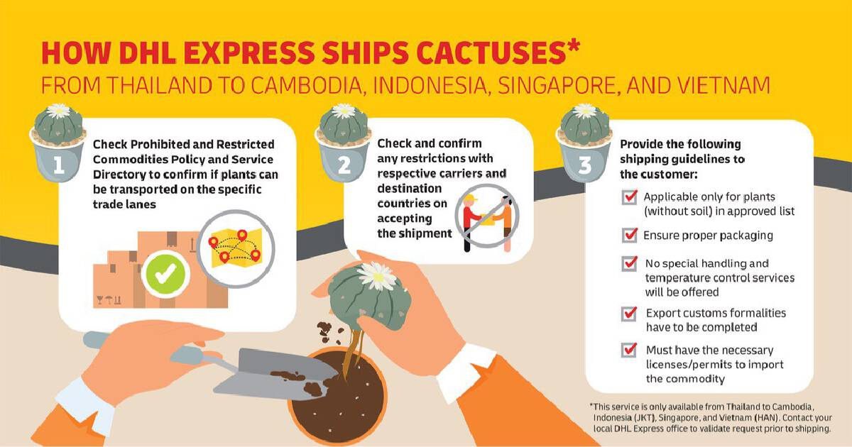 DHL Express Thailand launches next-day cactus export service to Singapore, Indonesia, Vietnam and Cambodia