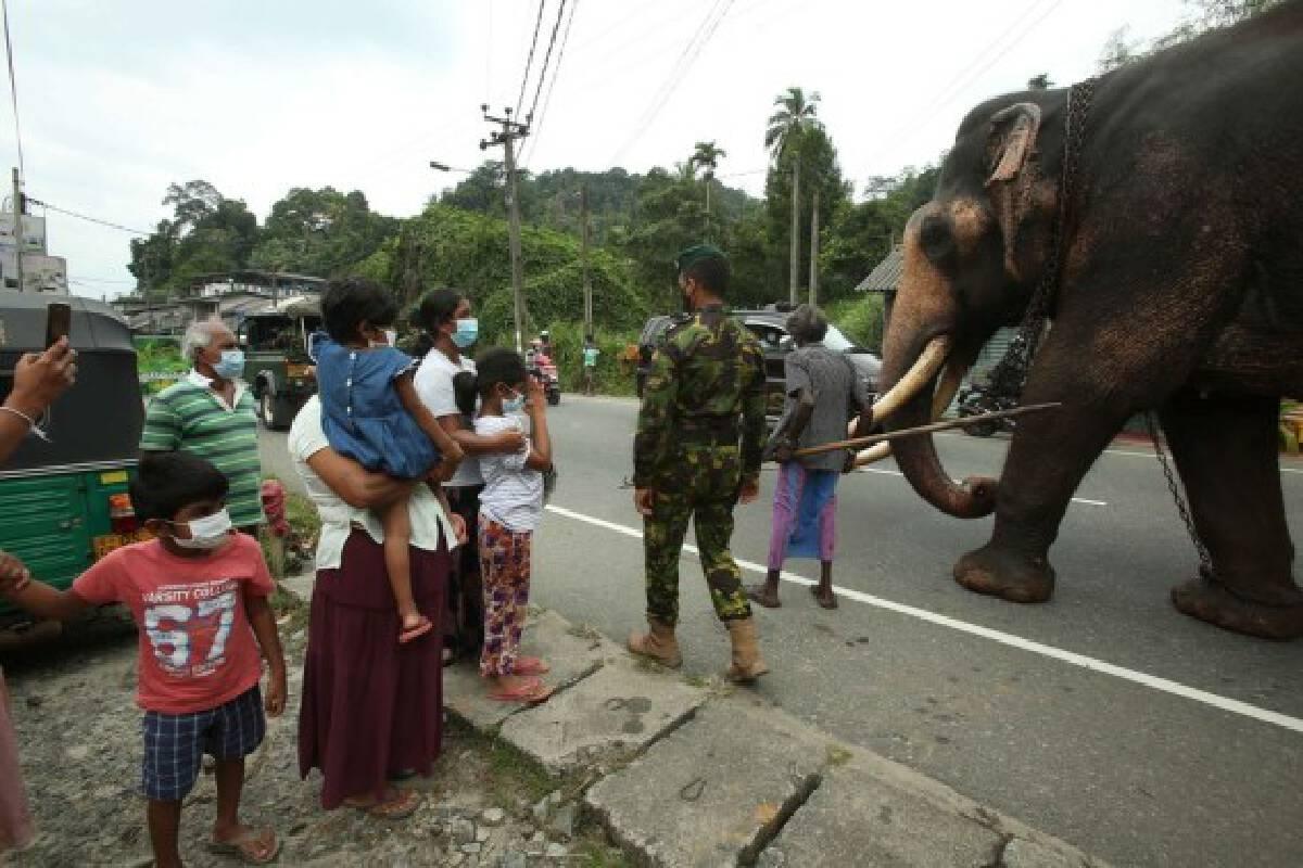 A royal elephant is seen passing Kadugannawa, a town nearby Kandy, Sri Lanka, on Aug. 11, 2021 to take part in the Kandy Esala Perahera.