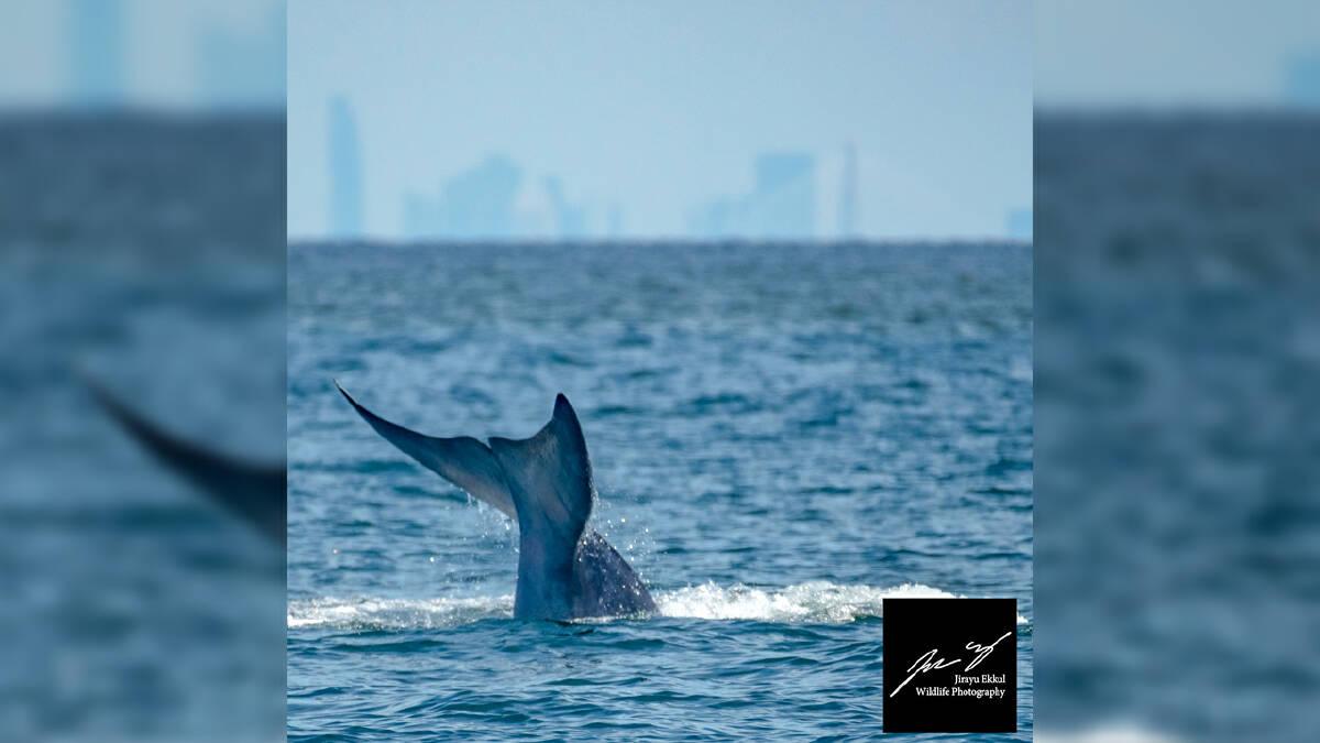 Photo Credit: Jirayu Ekkul Wildlife Photography