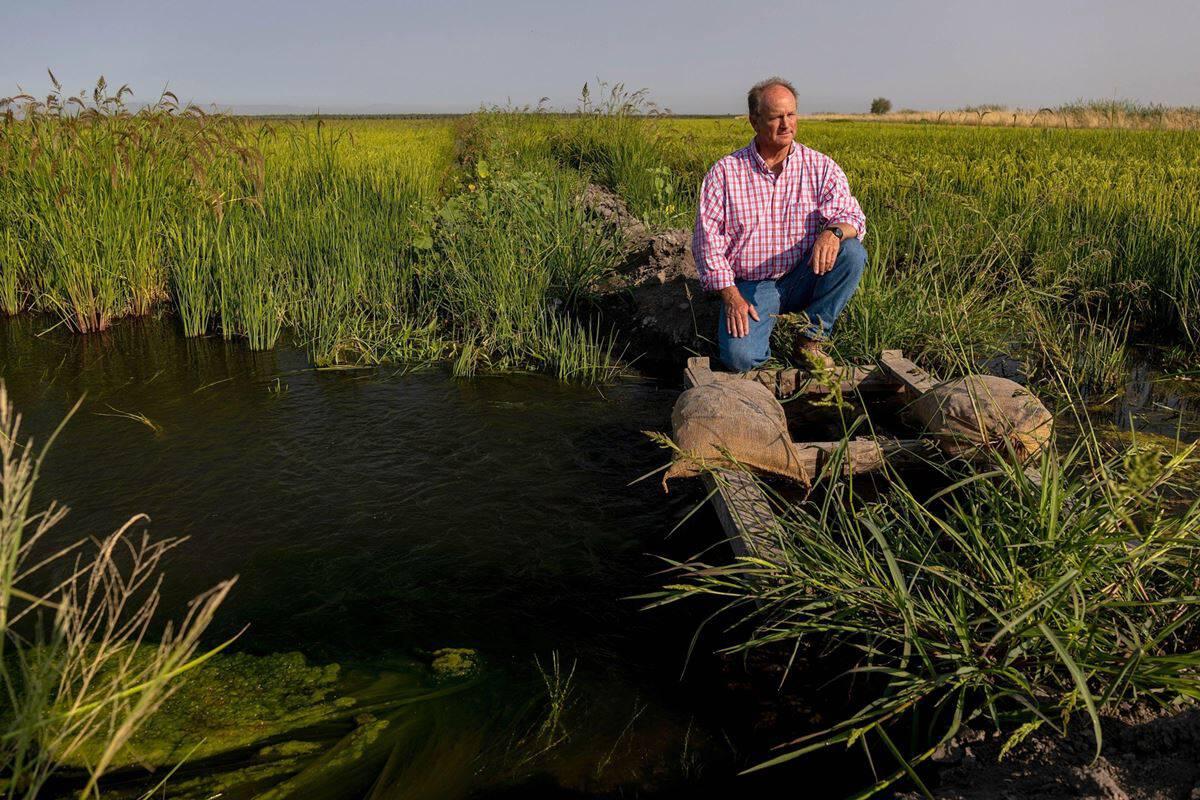 Climate change hits sushi supply chain amid California water war