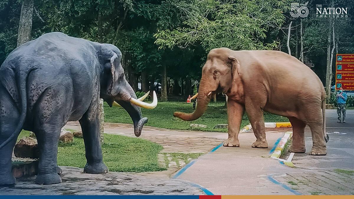 A one-sided battle of elephants