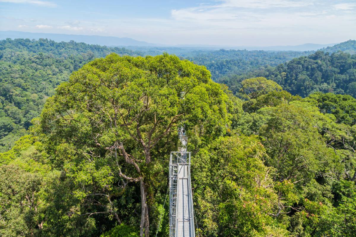 Ulu Temburong National Park in Temburong, Brunei (ASEAN-Korea Center)