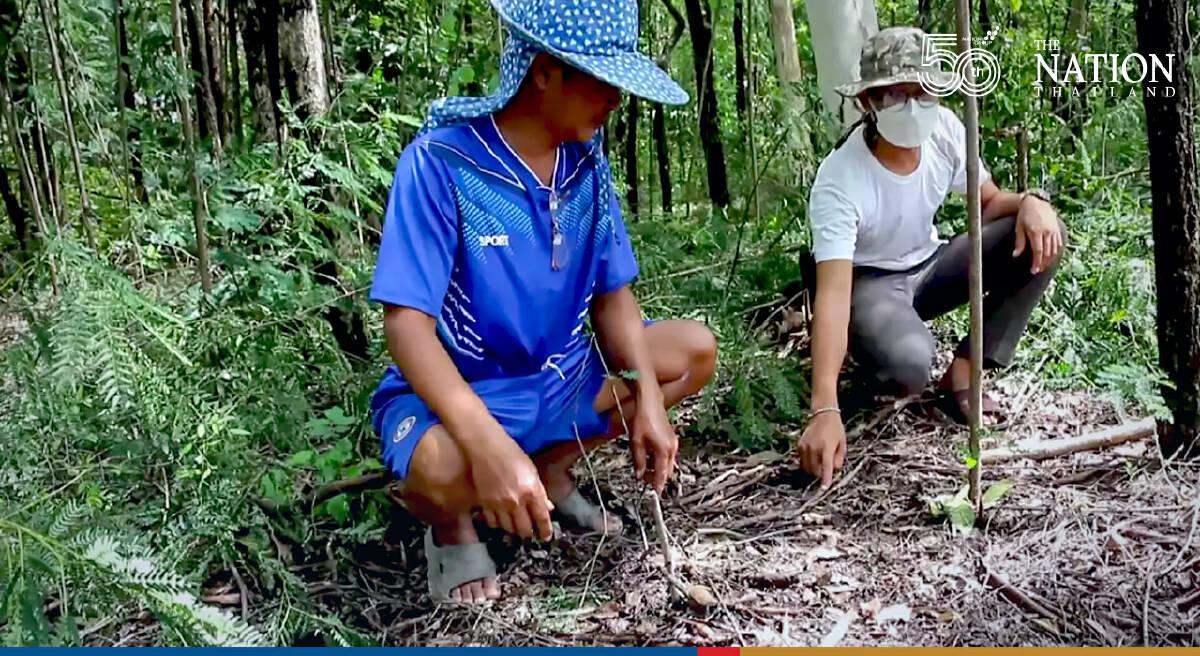 Petchabun villager stumbles across one of world's rarest mushrooms