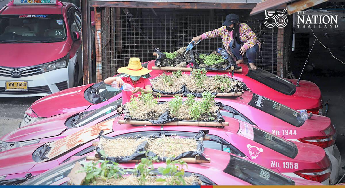 Bangkok's 'taxi graveyard' now a veggie marvel