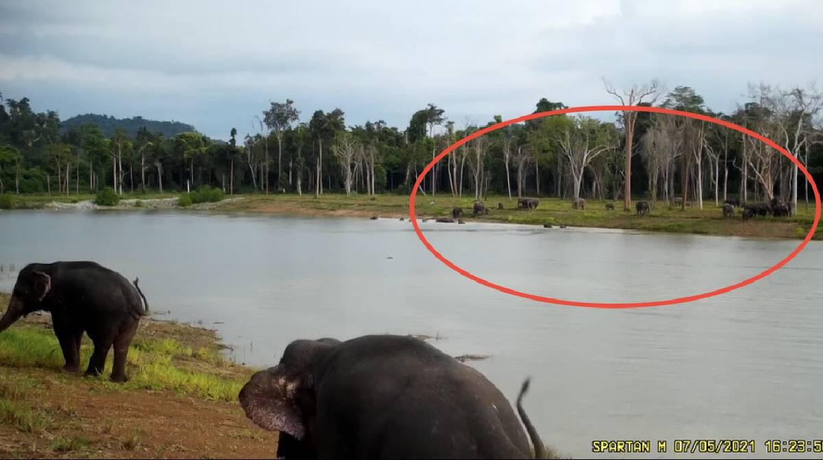 Bajrasudha Gajanurak : A Royal Elixir to Strengthen Wild Elephants