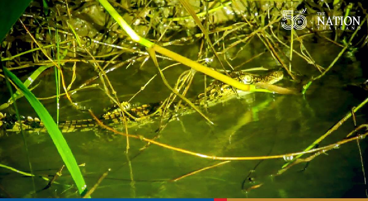 Photo Credit: Srepok Wildlife Sanctuary