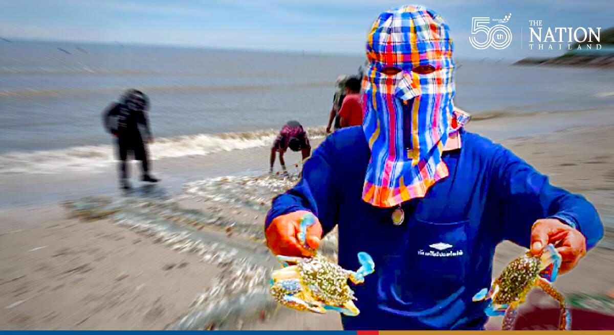 Aquatic animals washed ashore