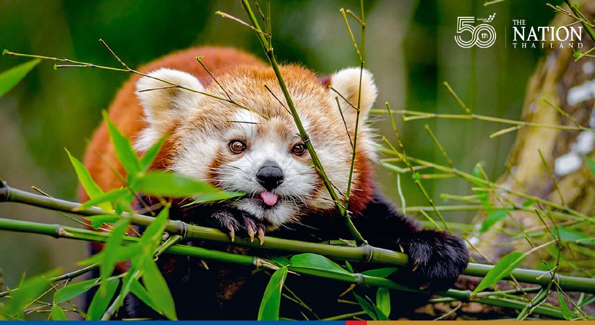 Comedy Wildlife Photography Awards on Oct 22