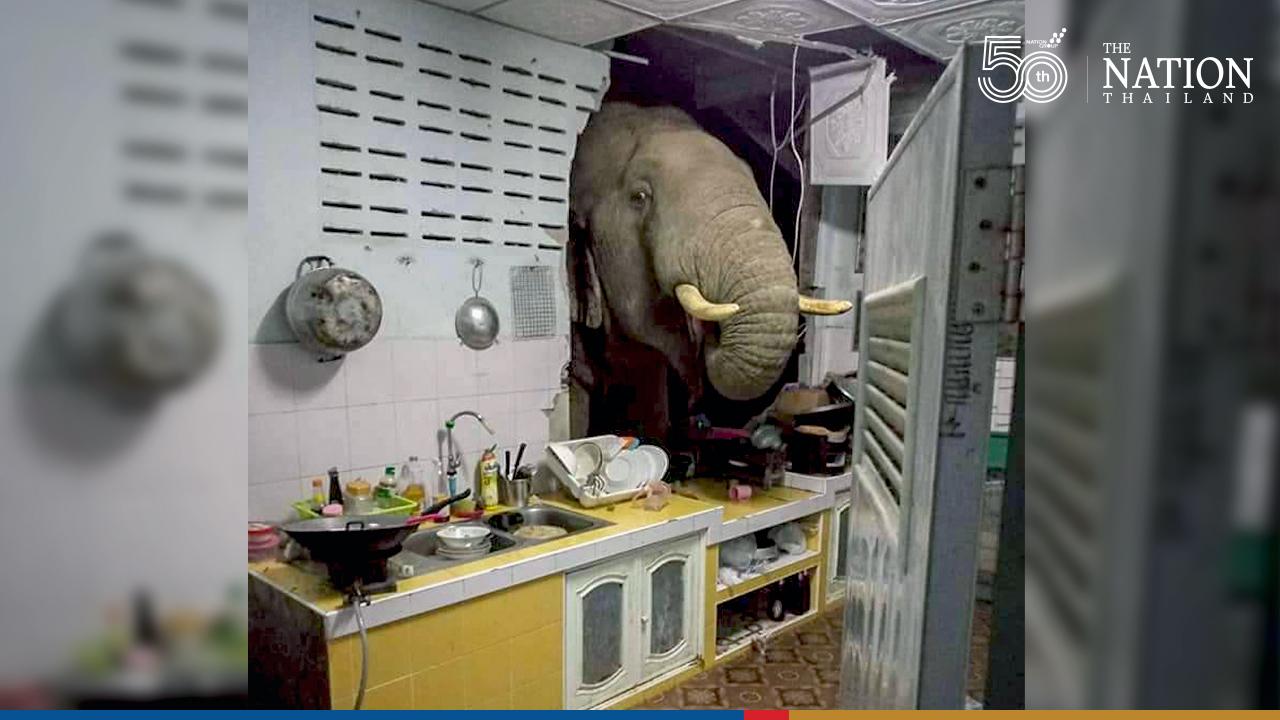 Wild elephant bulldozes his way into house in Hua Hin