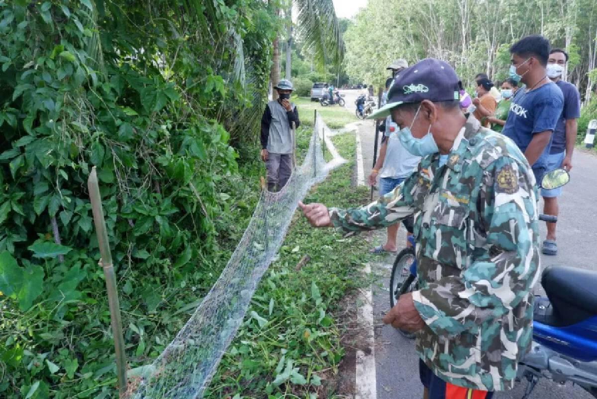 Hunt on for king cobras in Trang after over 20 seen last week
